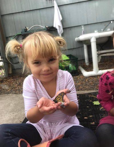 preschool butterfly