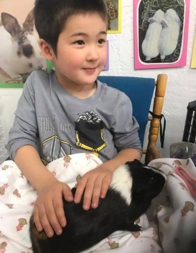 preschool guinea pig